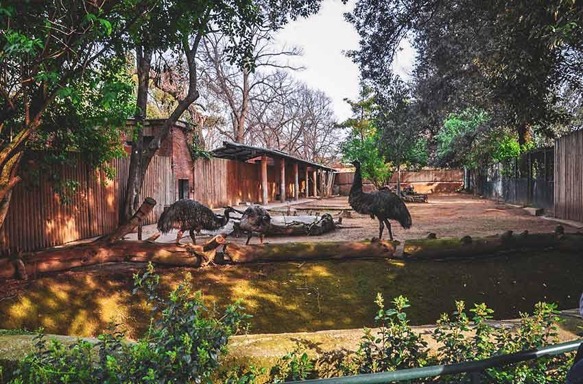rome en famille bioparc zoo rome